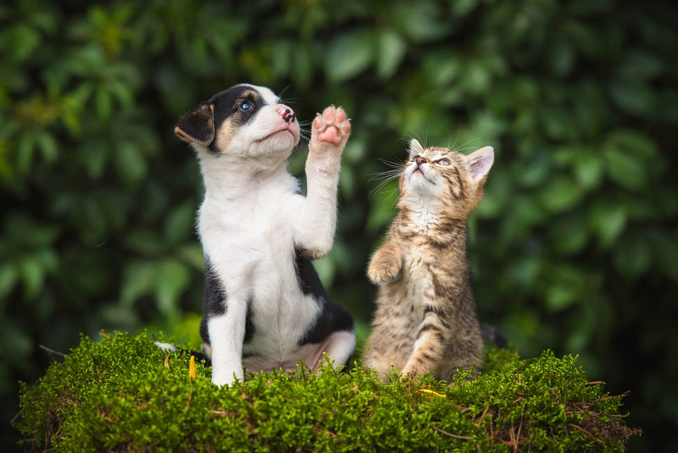 Estos son los cinco accidentes domésticos más frecuentes que sufren las mascotas