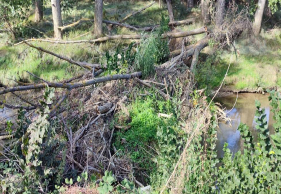 Tapón natural en el Río Carrión a su paso por Palencia