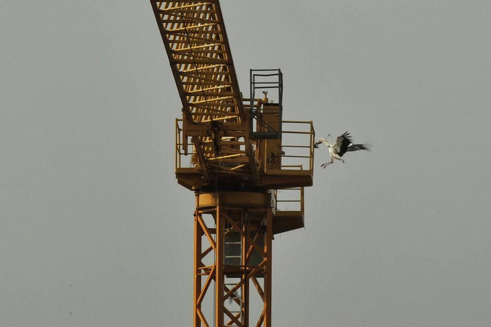 Cigüeñas anidadas en Ourense